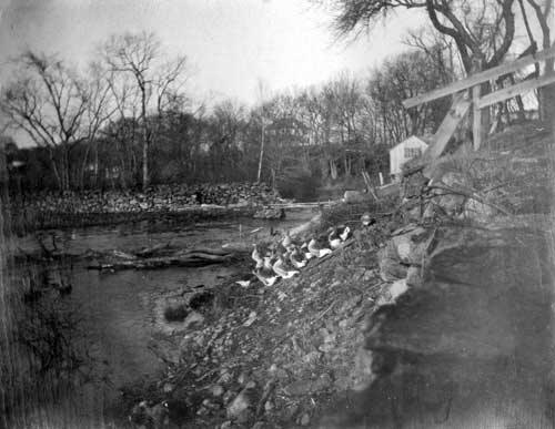 Looking towards the stone dam behind the house, circa 1910. The house barely visible through the trees was moved to Capron Road at Stillwater Road to accommodate the construction of Rt. 295.