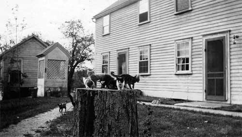 This vintage photo shows the kitchen wing addition that was added circa 1830.